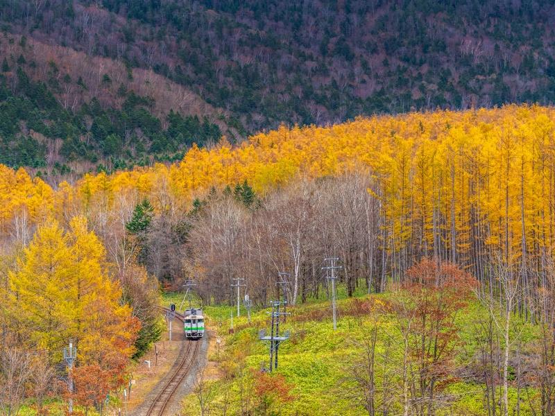 カラマツの紅葉と根室線の列車