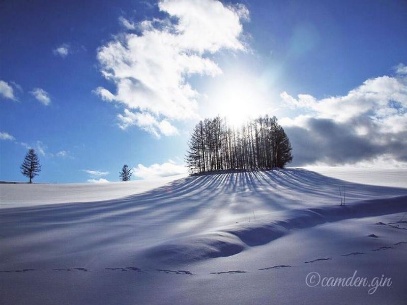 雪原とカラマツが創り出す光と影