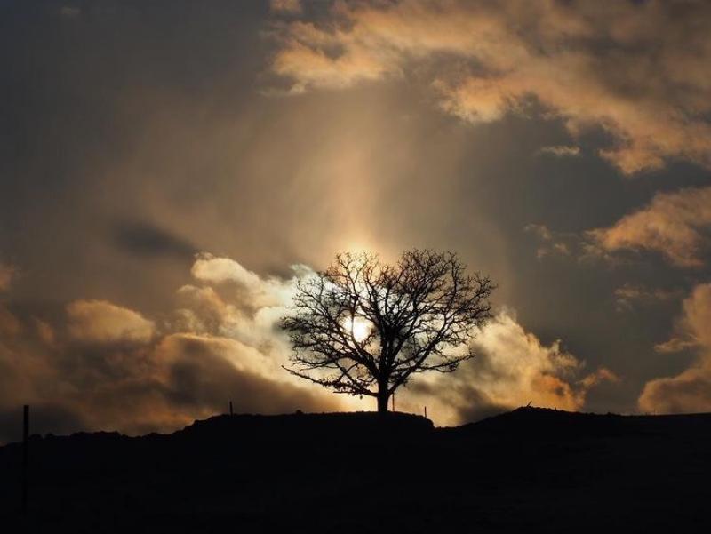 セブンスターの木 夕方