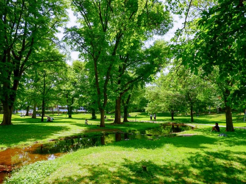 夏の北海道大学
