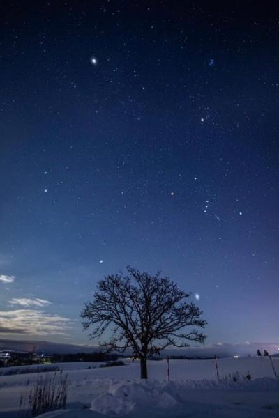 セブンスターの木 夜空