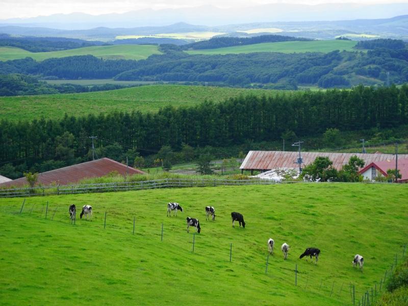 9月多和平展望15標茶町育成牧場