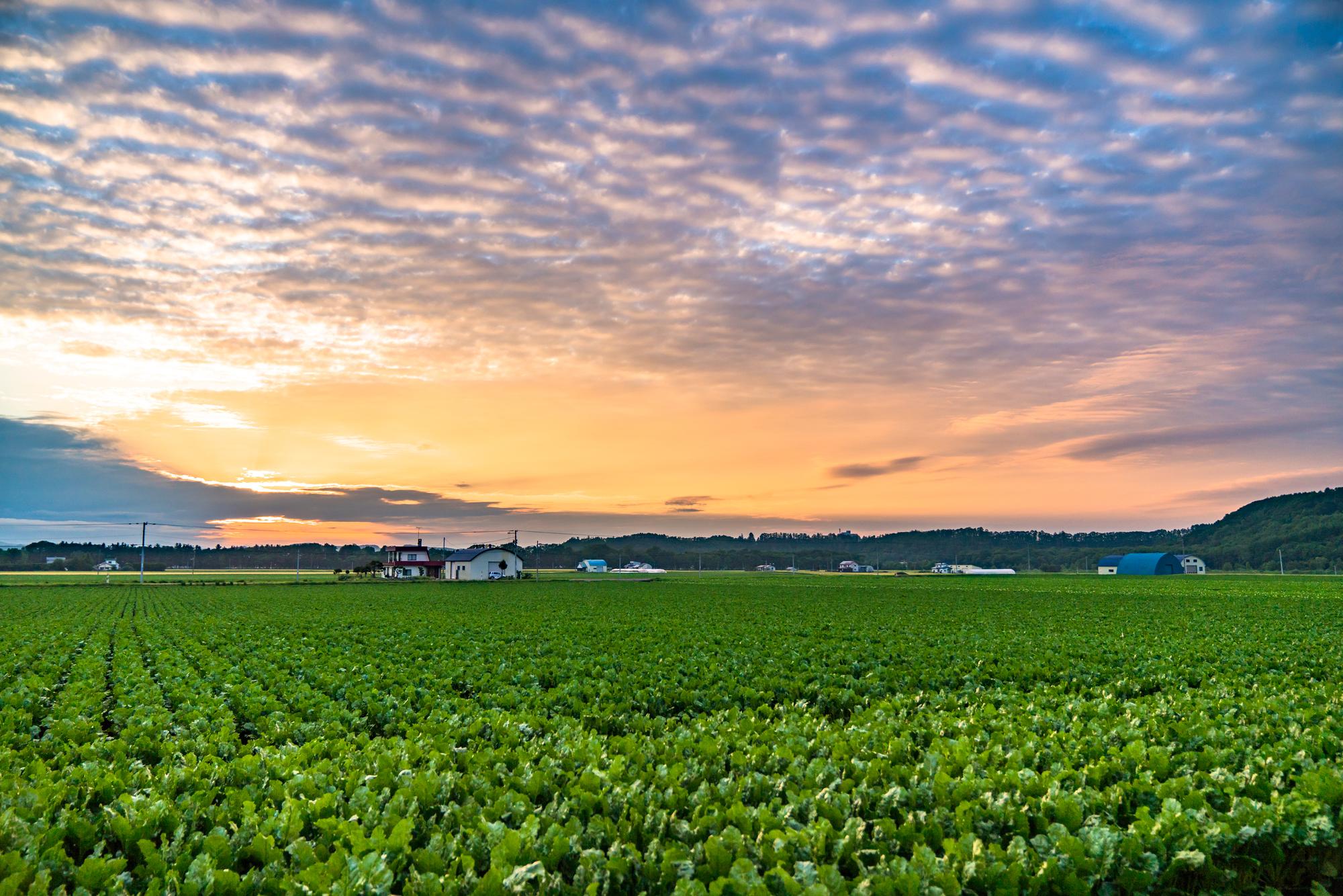 《北海道》美幌町・のどかな田園風景