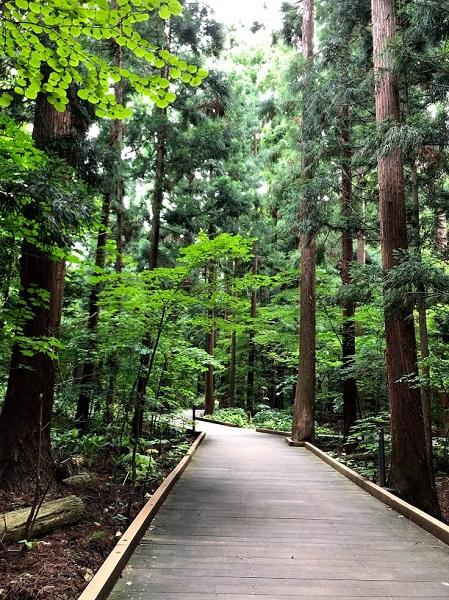 円山 遊歩道