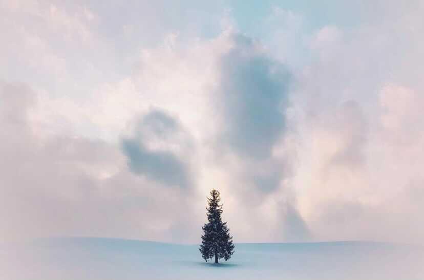 雪上の1本の木