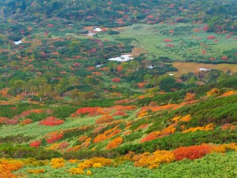 大雪山国立公園 旭岳周辺の紅葉