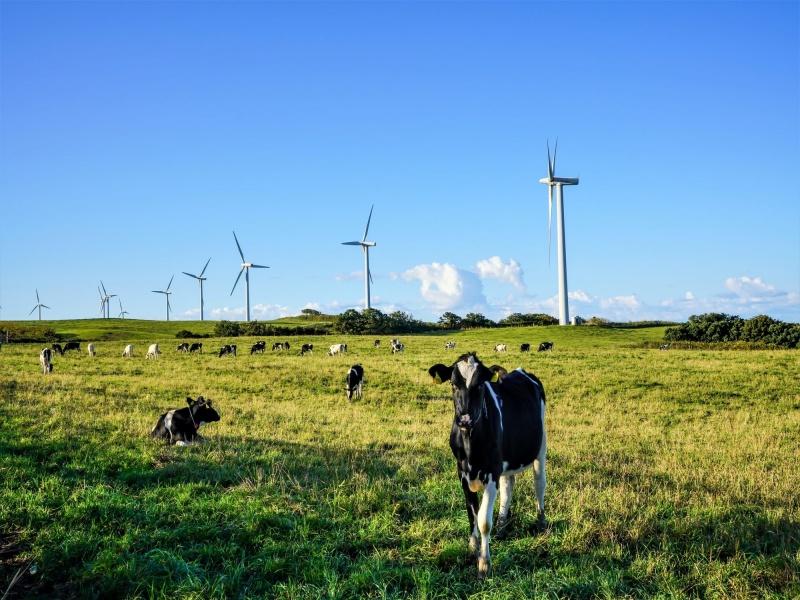 風力発電と牧場風景