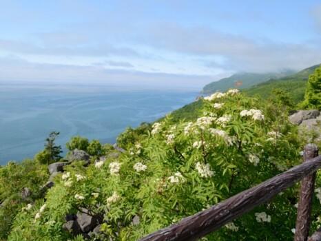 雄冬岬の風景