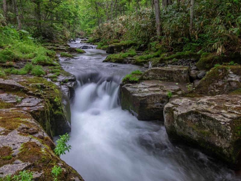 新緑と激流の滝 美深町仁宇布の十六滝