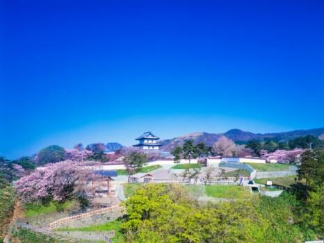 桜の松前城跡の全景