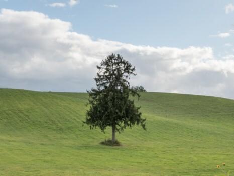 春よ来いの木