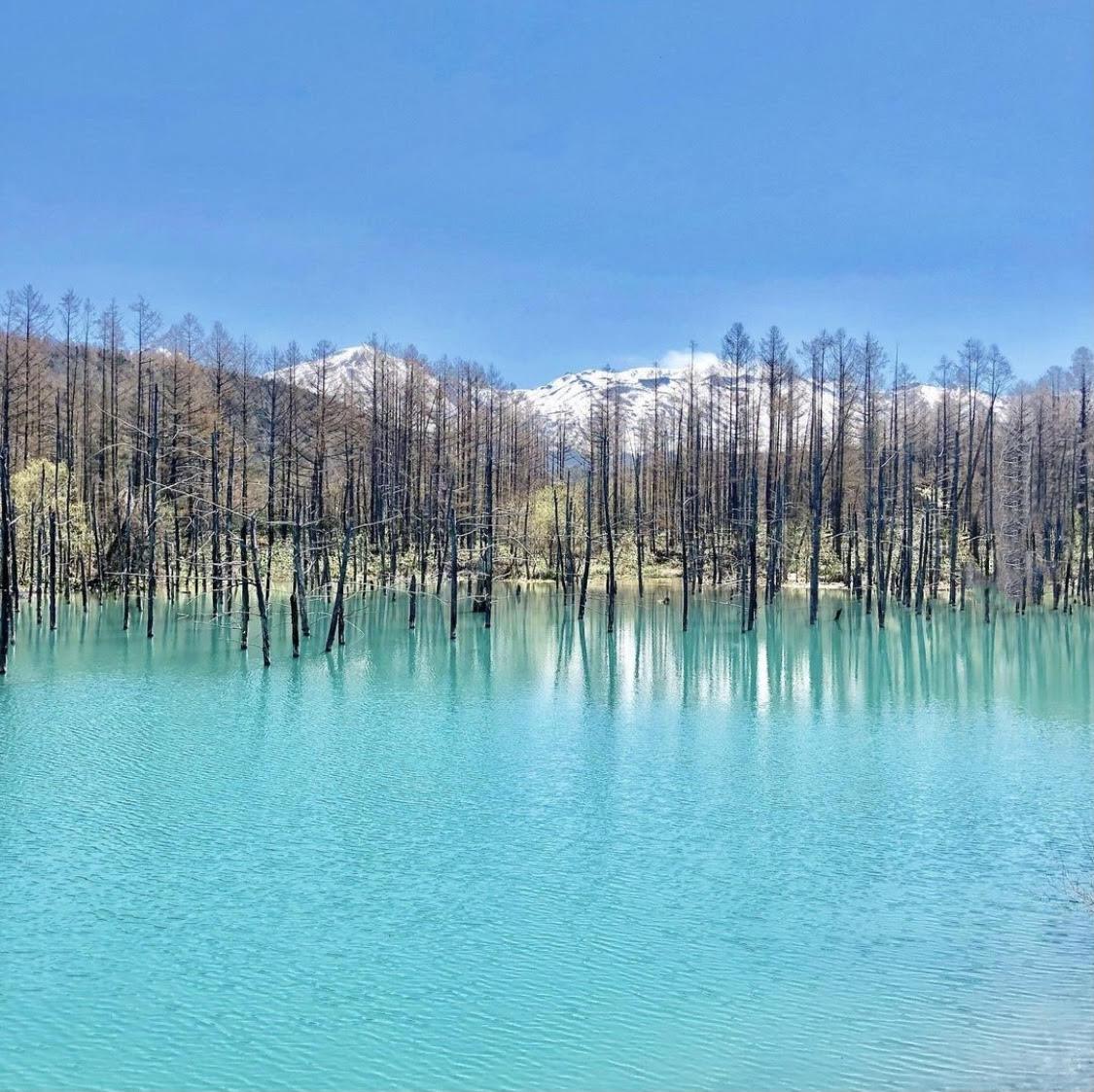 旭川 青い池
