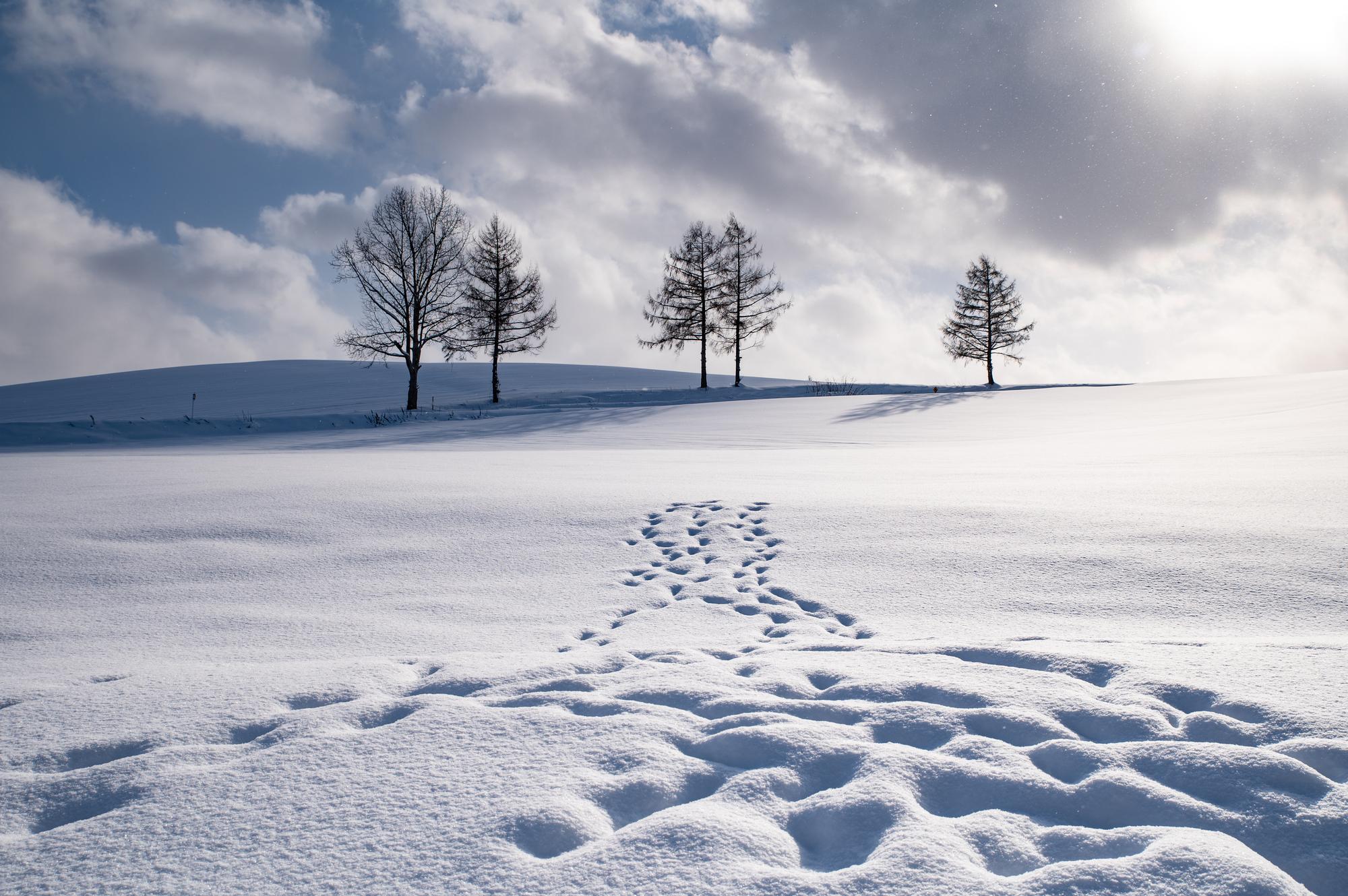 美瑛の冬景色