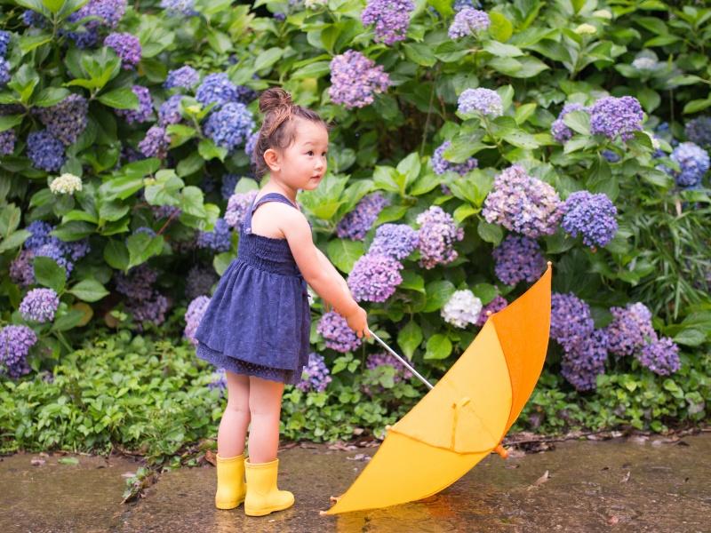 アジサイの前に傘を持つ女の子