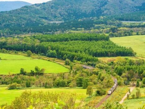 増田山から見た特急おおぞら(261系) 北海道新得町