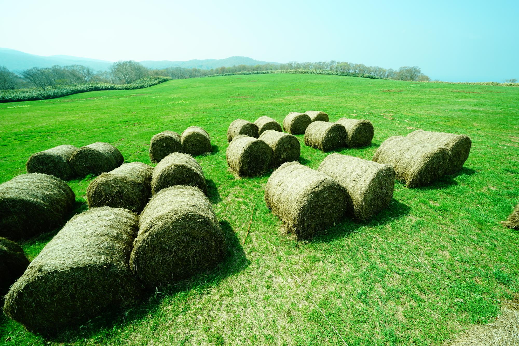 奥尻島の牧草地