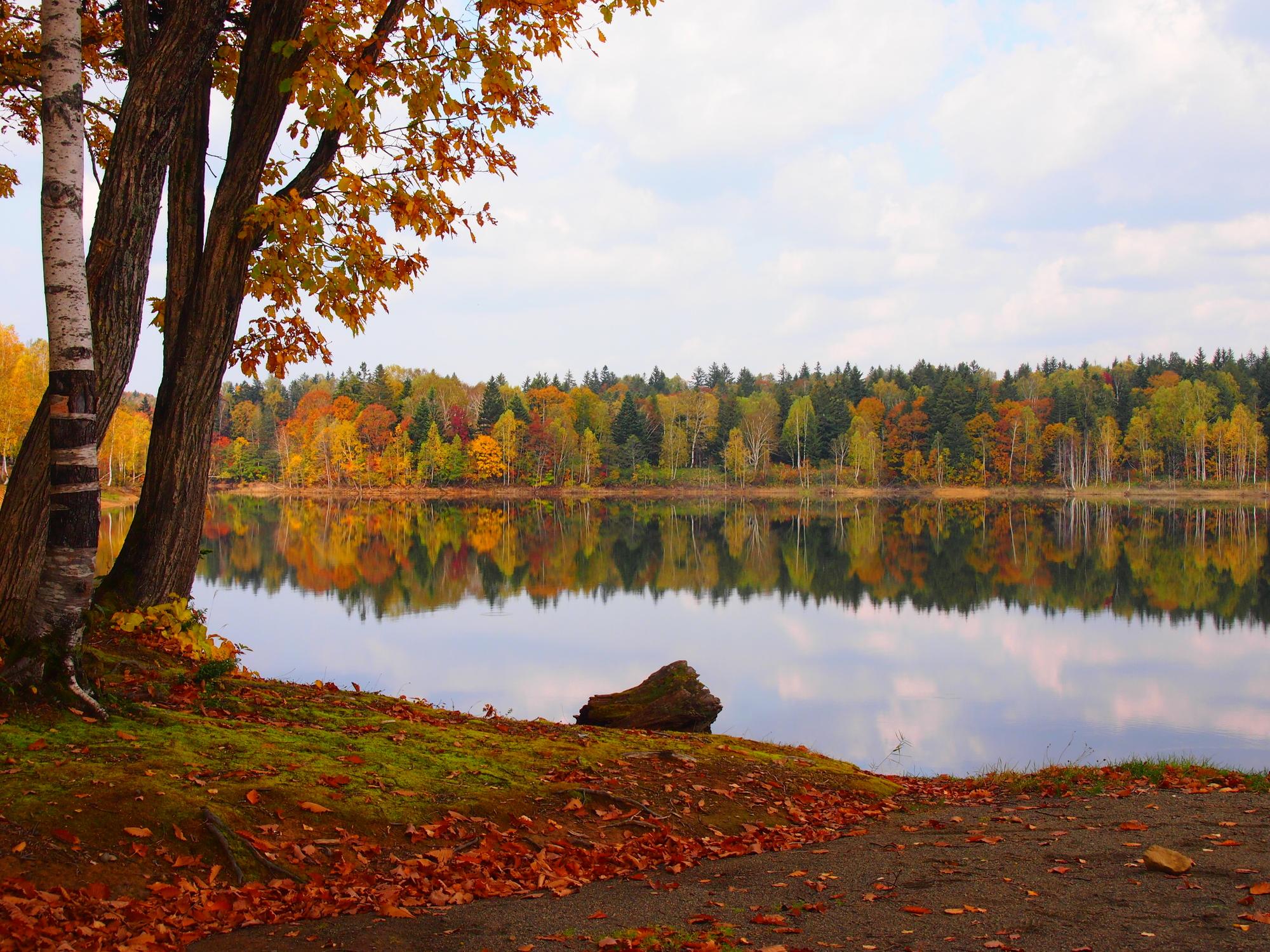 紅葉に染まる秋の朱鞠内湖