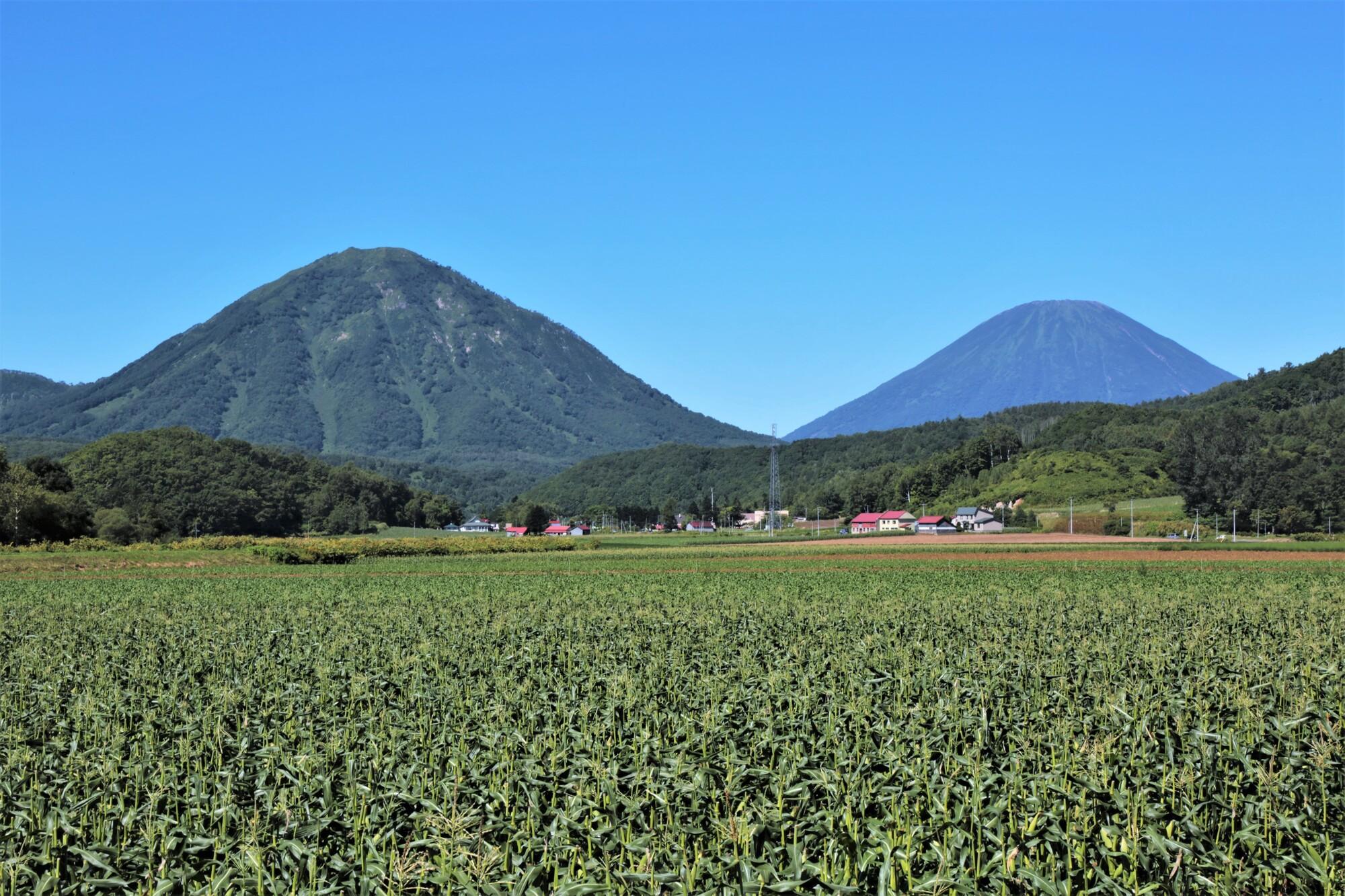 尻別岳・羊蹄山(北海道喜茂別町)