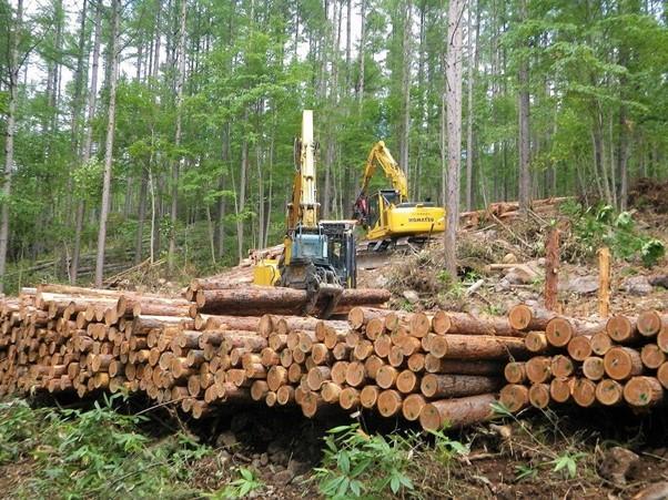 針葉樹の伐採を行う林業の現場