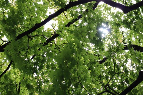 ナガヤマレスト 樹 木