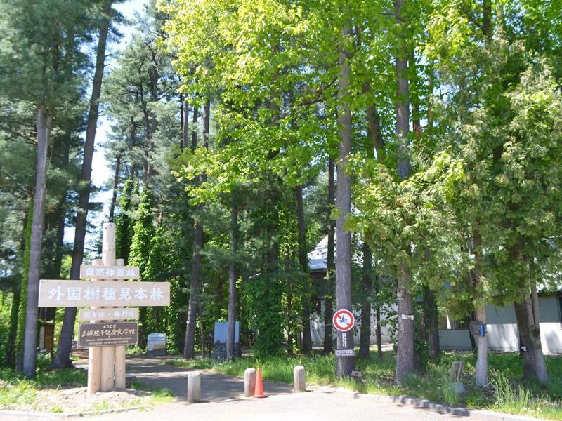 外国樹種見本林 入口