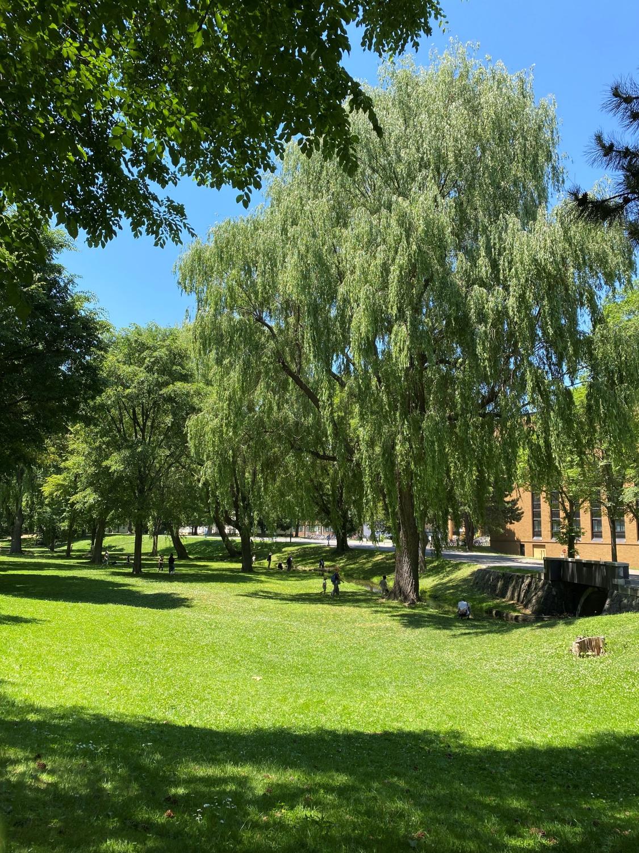 萩原さんお気に入りの場所・北海道大学キャンパス