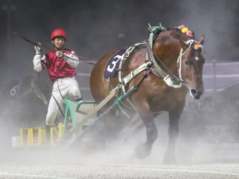 昨年優勝馬のミノルシャープ