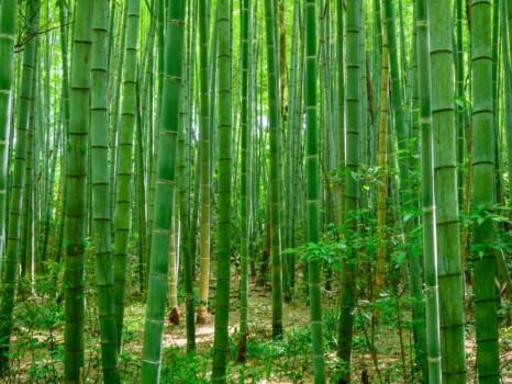 竹林 橋立自然公園(石川県加賀市)7月撮影