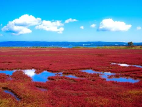 青空と真っ赤に色づいたサンゴ草 (網走市)