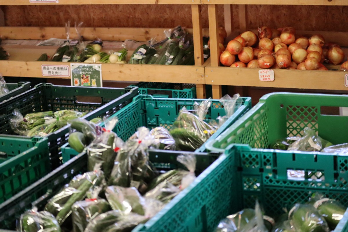 八紘学園 野菜