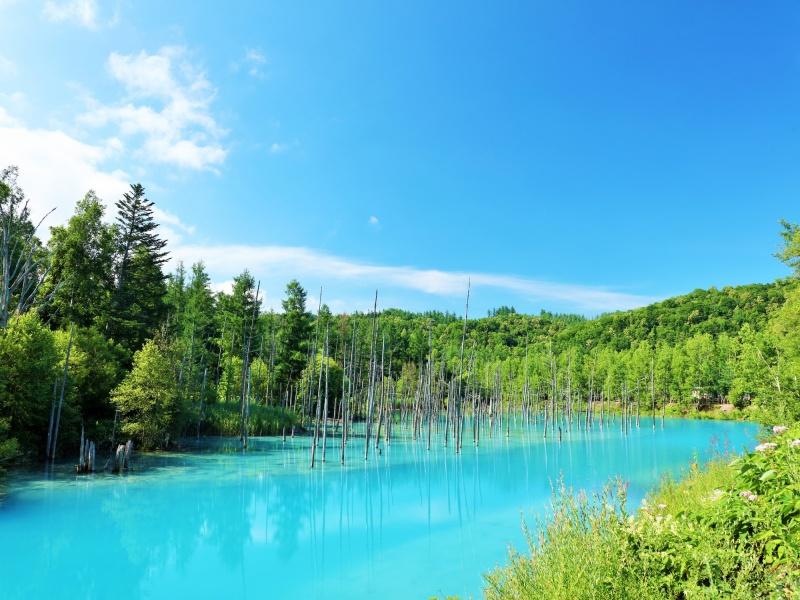北海道 夏の青空と青い池