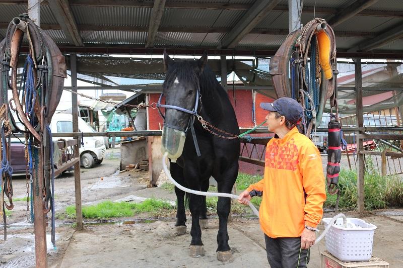 治療中の馬と谷調教師