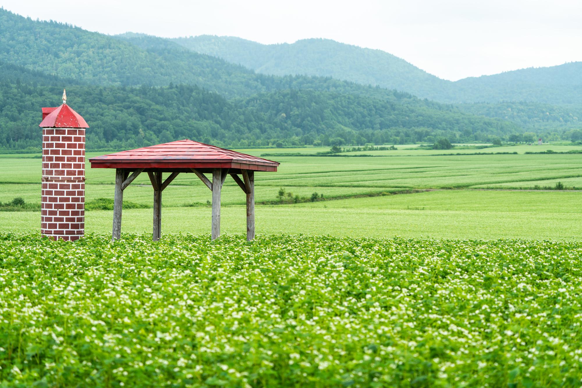 幌加内の蕎麦の花展望台