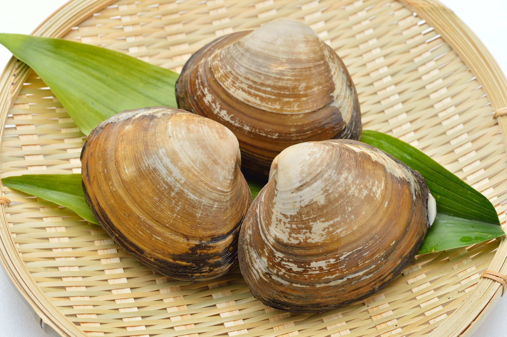 北寄貝、ほっき貝、ホッキ貝、ホッキガイ。国産。活貝で未加熱です。